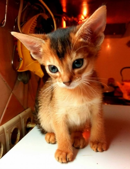 Кошечка от Серенити!