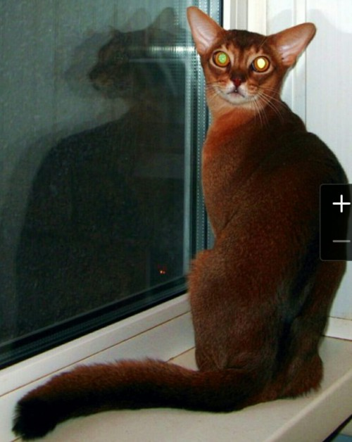 Night Hunter F&C Dexter